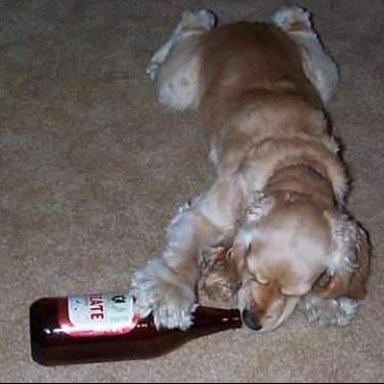 Alcoholic Annie